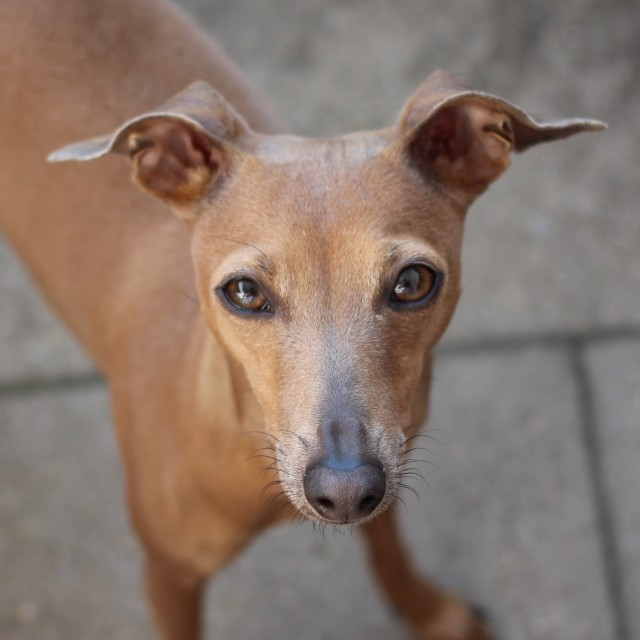 Community Hundeblog miDoggy Lola