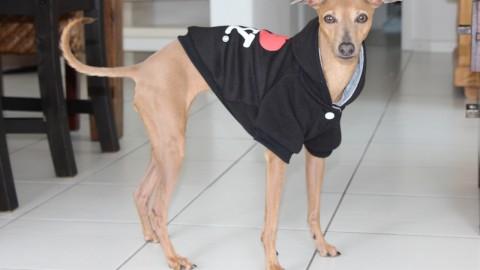 [Lola liebt Hundemäntel] Alle auf einen Blick…