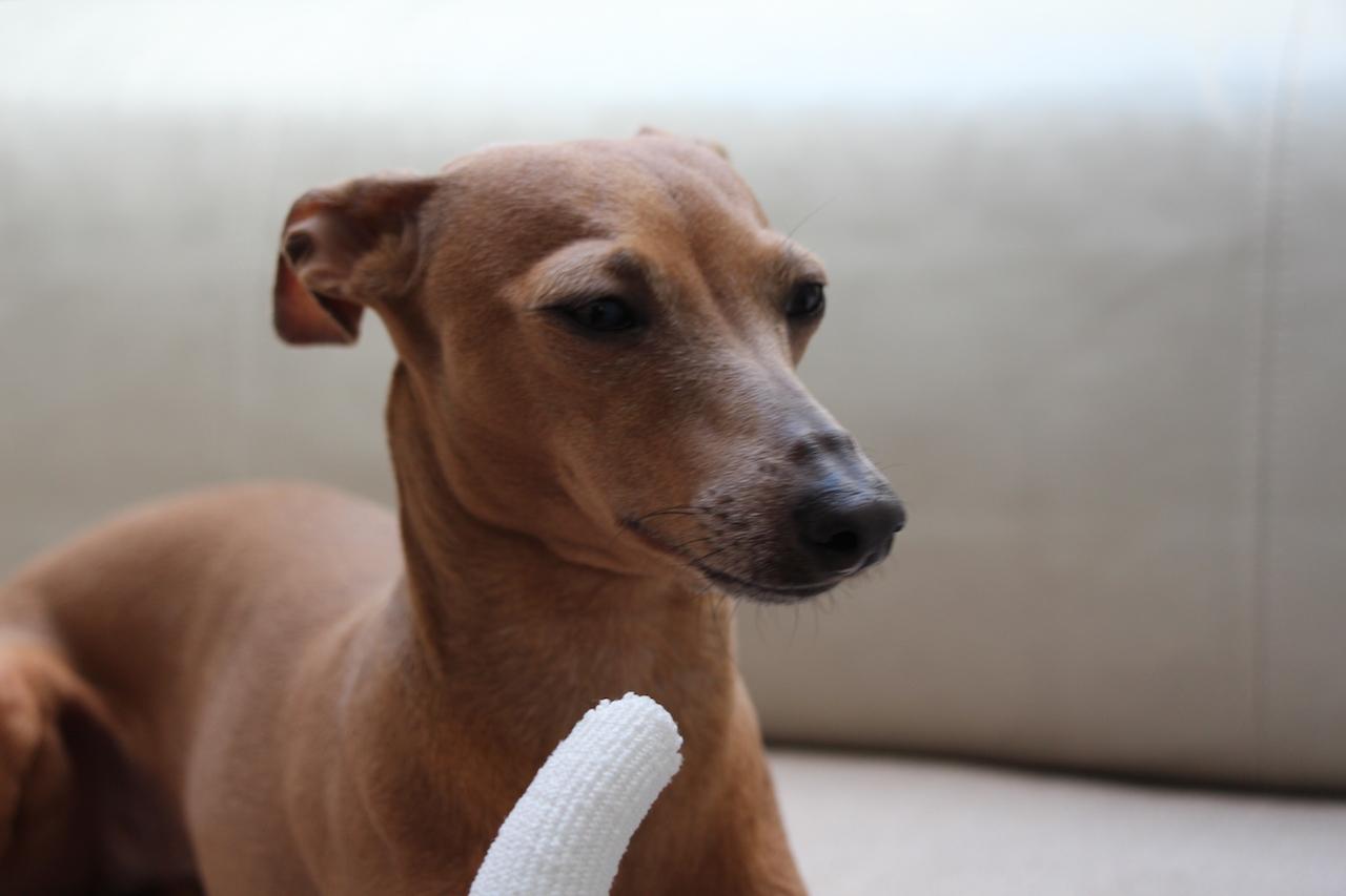 Zahnpflege Hund Bogadent Erfahrung