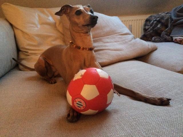 Schockzustand beim Spiel FC Bayern gegen FC Porto...