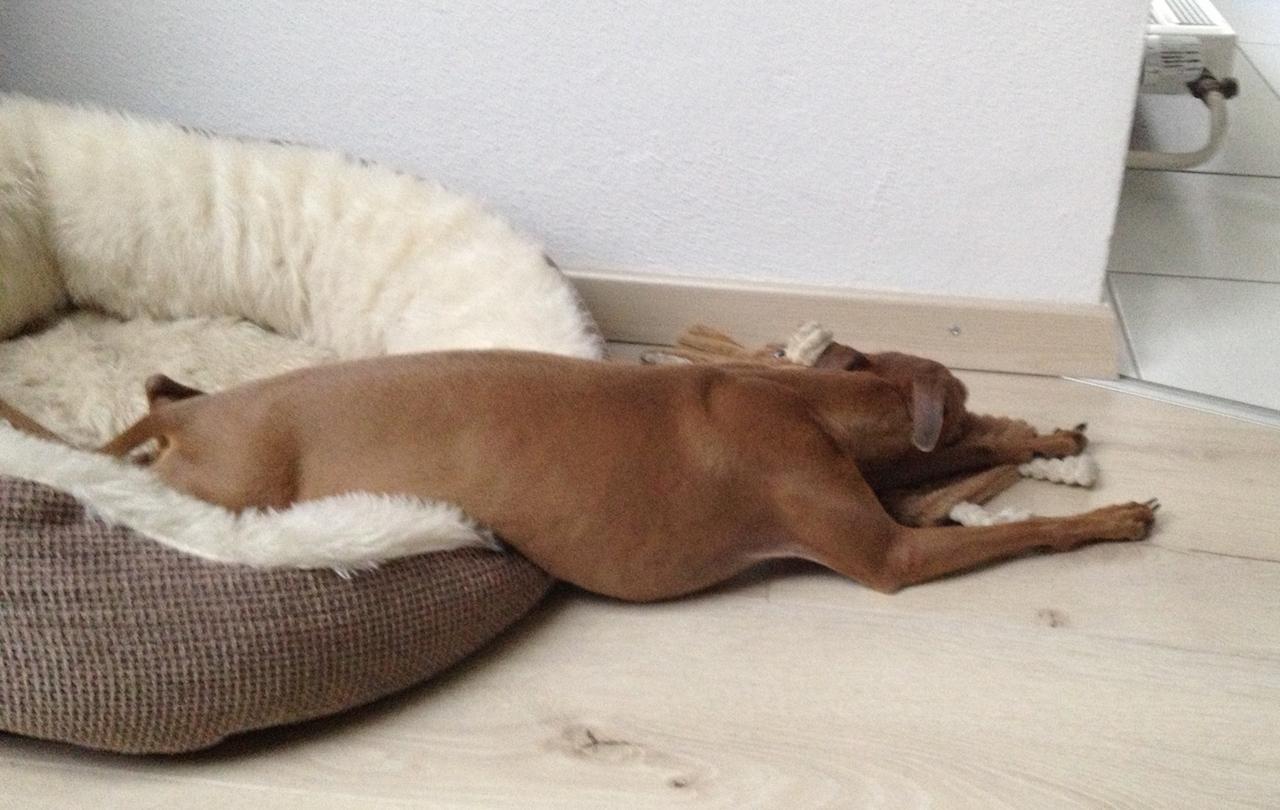 Kuscheliges Hundekörbchen