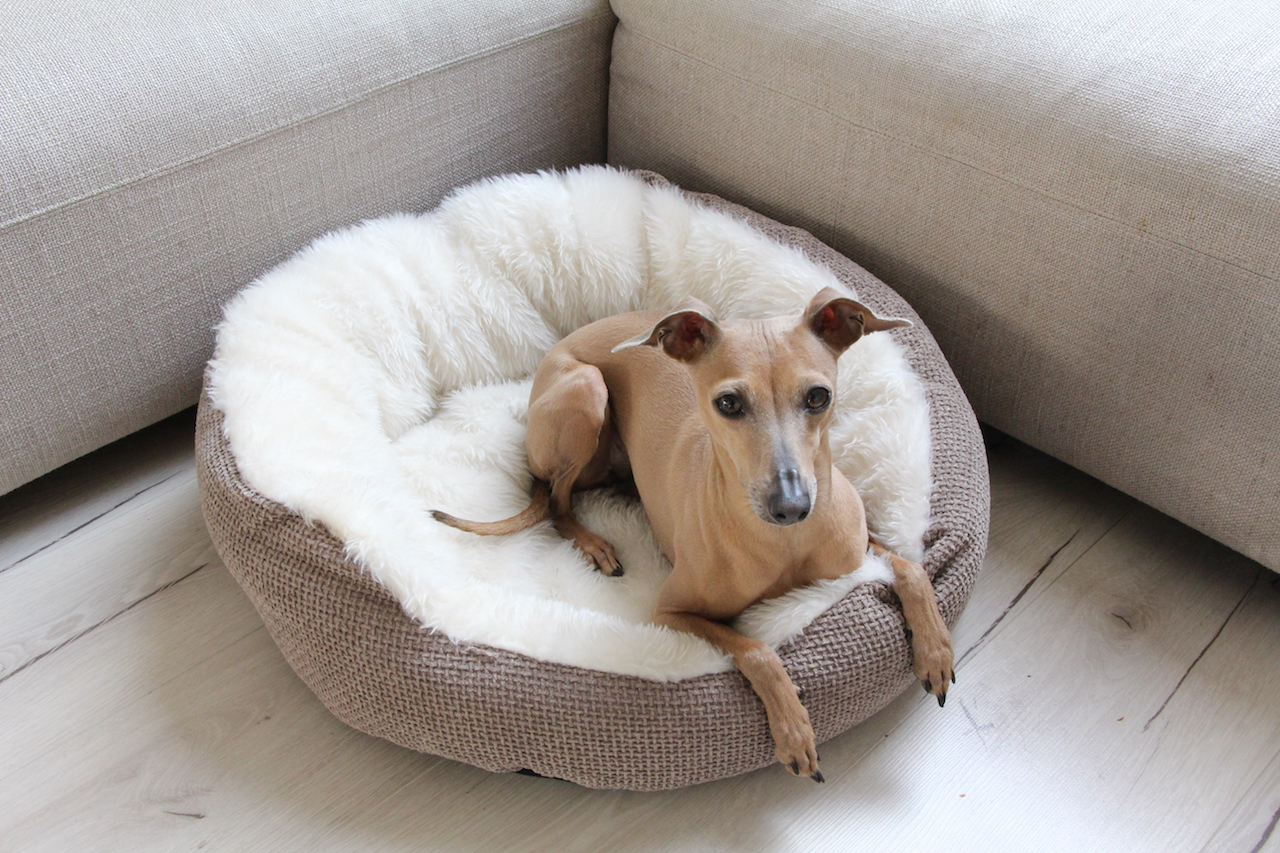 Kuscheliges Hundebett Hund