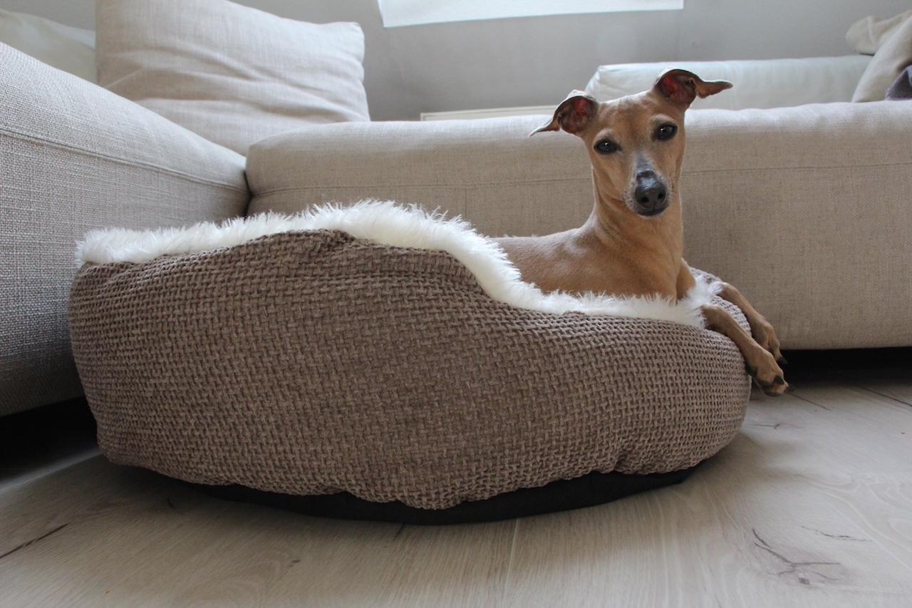Kuscheliges Körbchen für Hunde Tipps