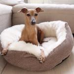 Kuscheliges Körbchen für Hunde