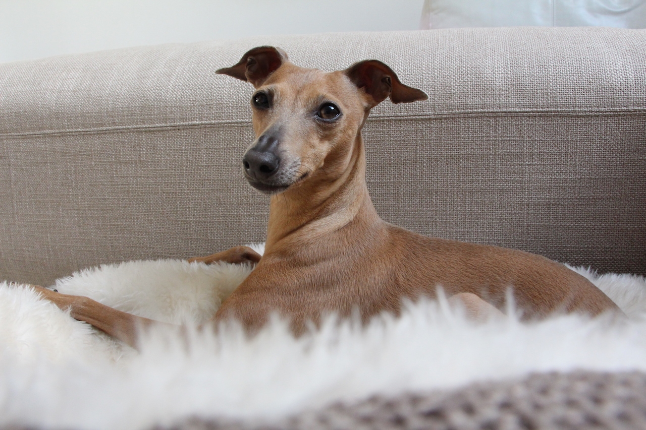 Kuscheliges Hundebett Erfahrungen