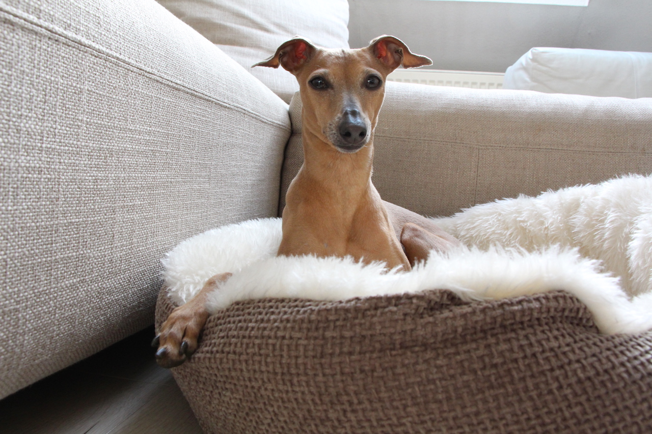 Kuscheliger Hundekorb Erfahrungen