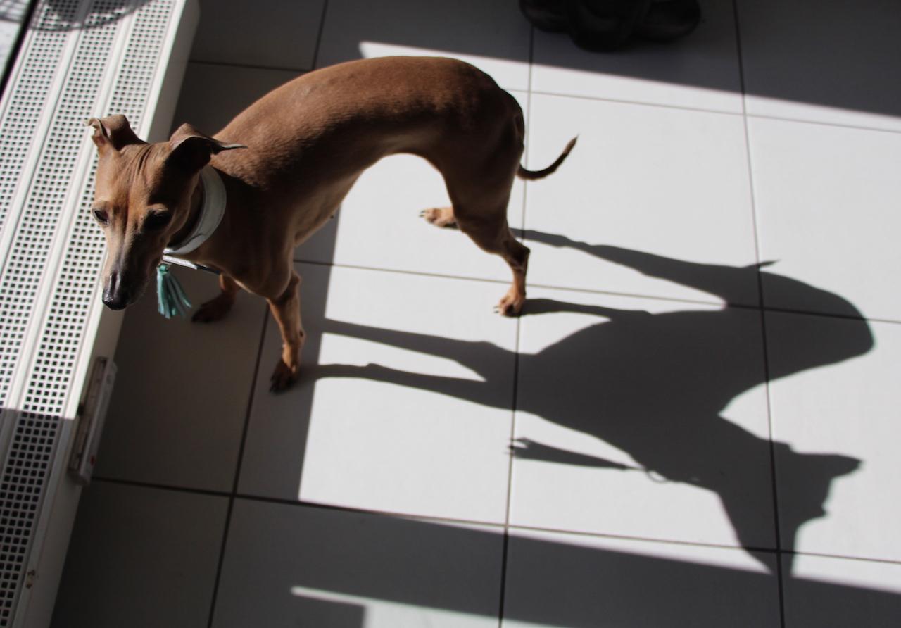 Halsband LeRoiy - Hundeblog miDoggy