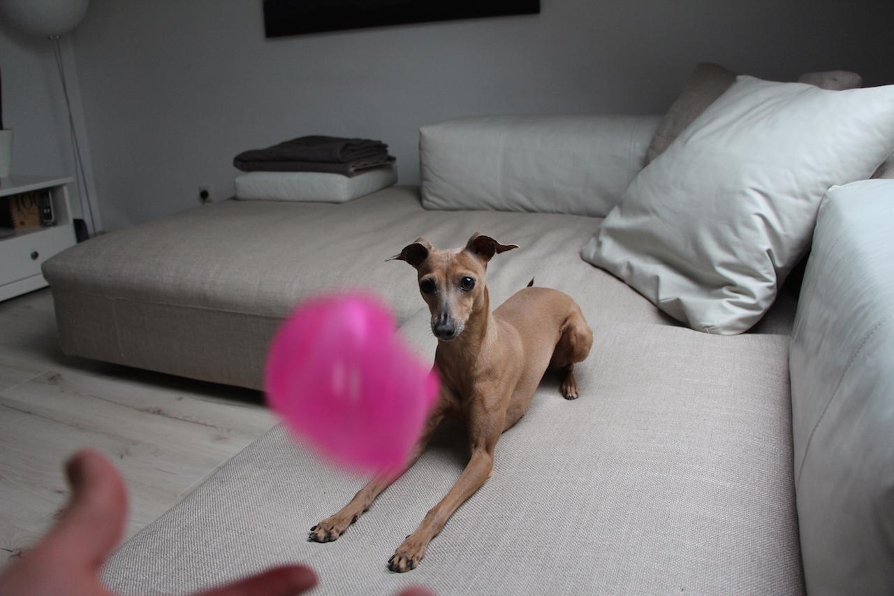 Hundeblog miDoggy