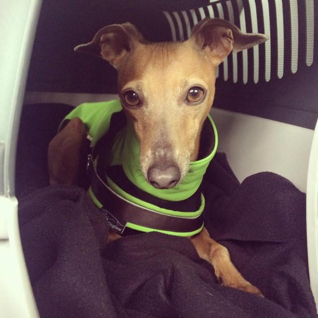 Lolas Wochenrückblick - Hundeblog miDoggy