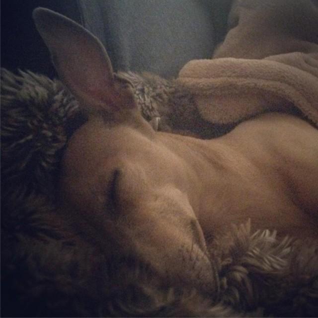 Lola's Wochenrückblick - Hundeblog miDoggy