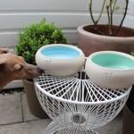 Mint Keramiknapf von Treusinn - Hundeblog miDoggy