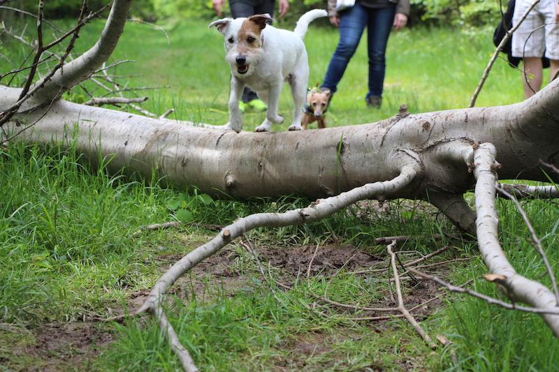 Spaziergang im Wald mit Hund - Hundeblog miDoggy