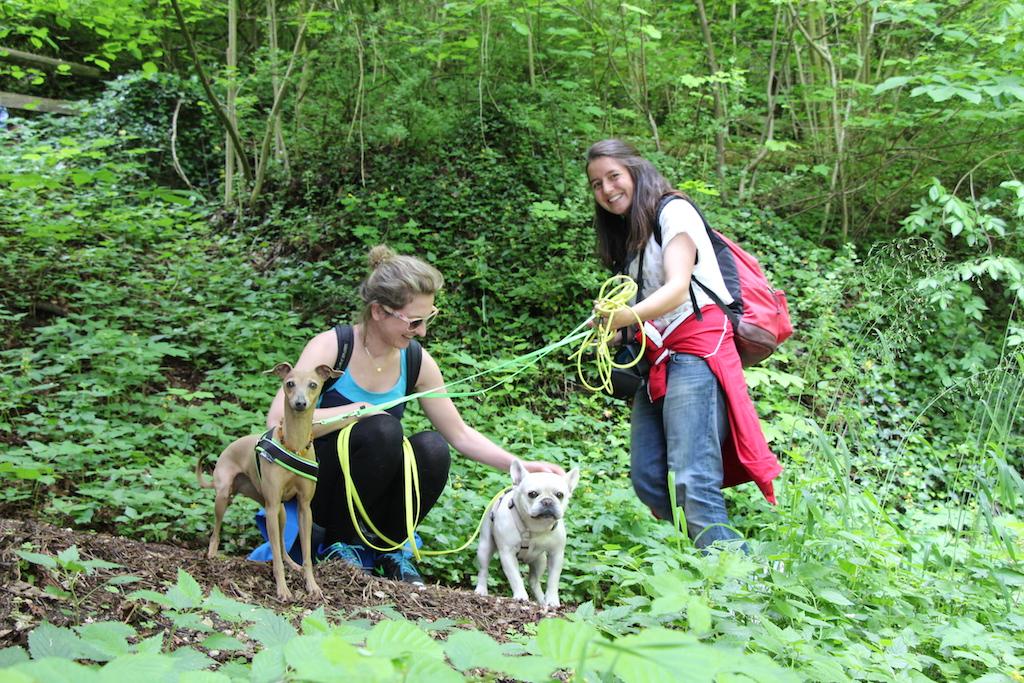 Wandern mit Hund - Hundeblog miDoggy