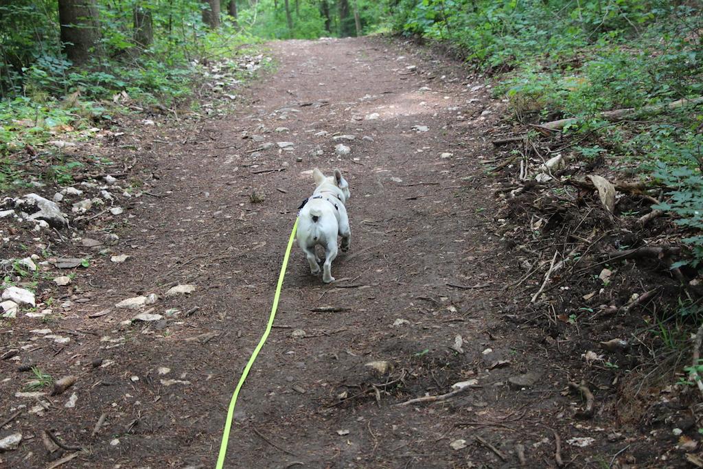 Wanderung mit Hund - Hundeblog miDoggy