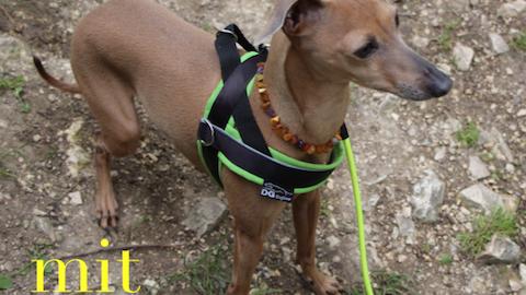 Wanderung mit Hund auf der Schwäbischen Alb