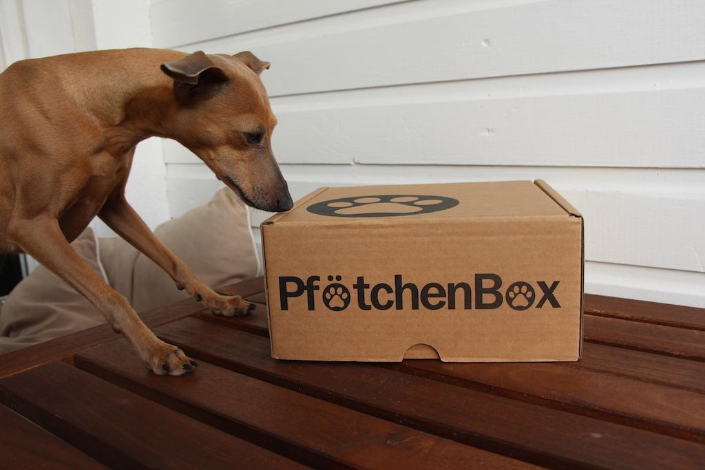 Abo-Box Hunde-Blog miDoggy