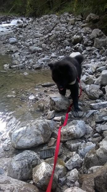 Eurasier - Hundeblog miDoggy