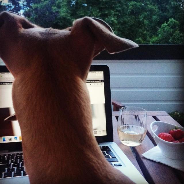 Hundeblog miDoggy - Lola's Wochenrückblick