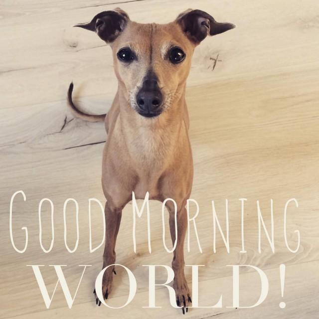 Hundeblog miDoggy - Wochenrückblick