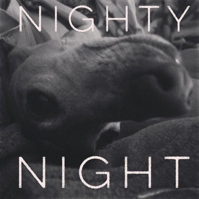 Hunde-Blog miDoggy - Wochenrückblick