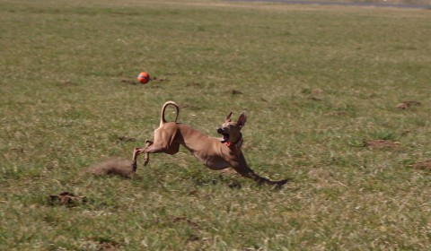 Hunde in Bewegung fotografieren