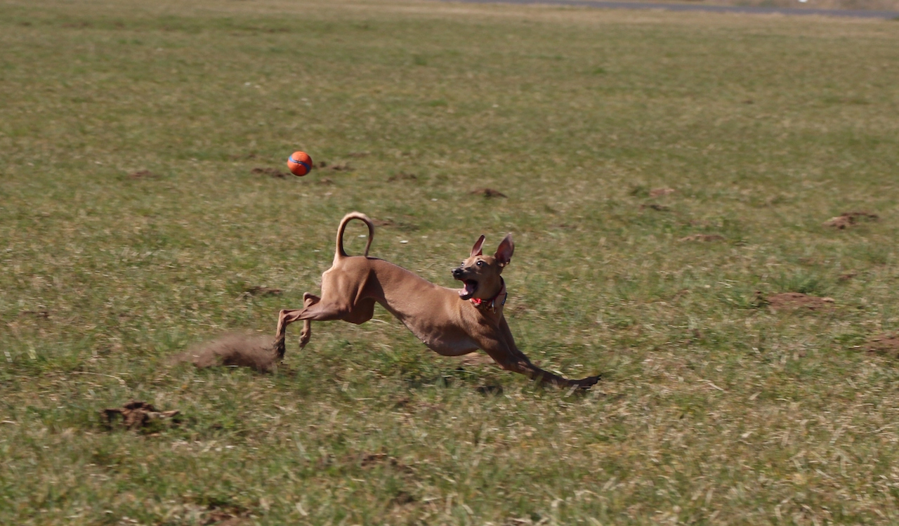 Hundeblog miDoggy - Hunde in Bewegung fotografieren