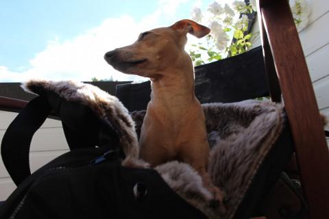 Kuschelige Hundetasche: Die Lösung für unterwegs