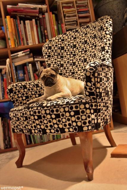 Mops Molly Hundeblog miDoggy