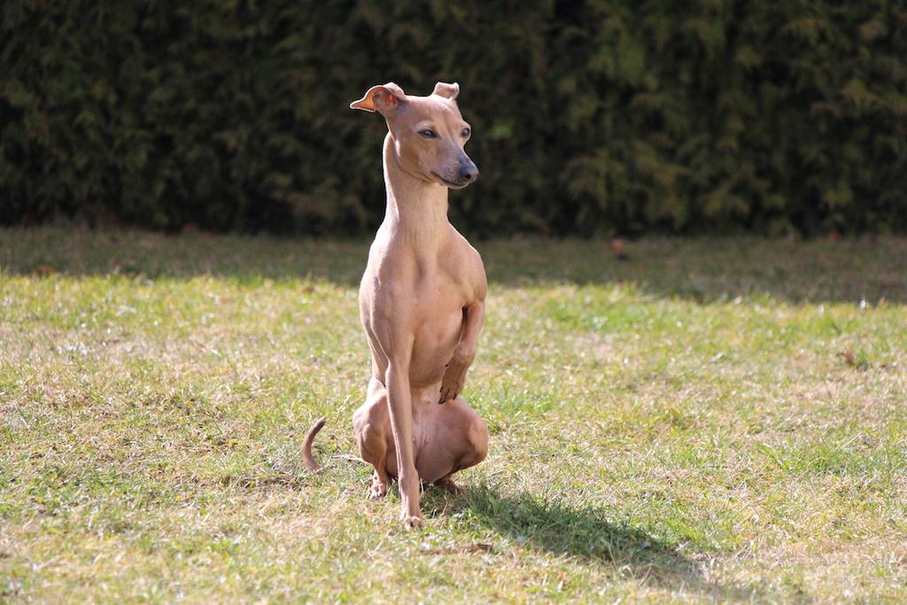 Tag des Hundes-Hundeblog miDoggy