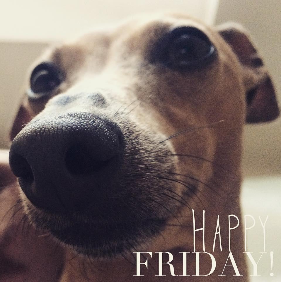 Wochenrückblick Hunde-Blog miDoggy