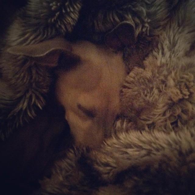 Wochenrückblick - Hunde Blog miDoggy