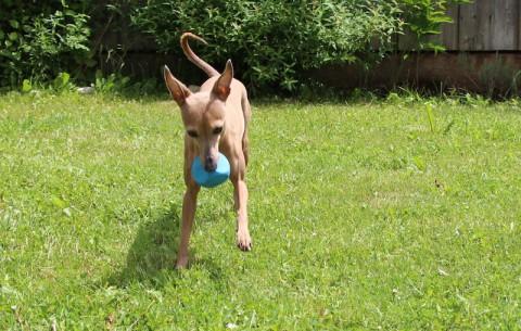 Lola's neuestes Wurfspielzeug