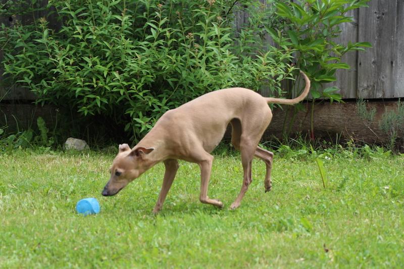 Hunde-Wurfspielzeug - Hunde-Blog miDoggy