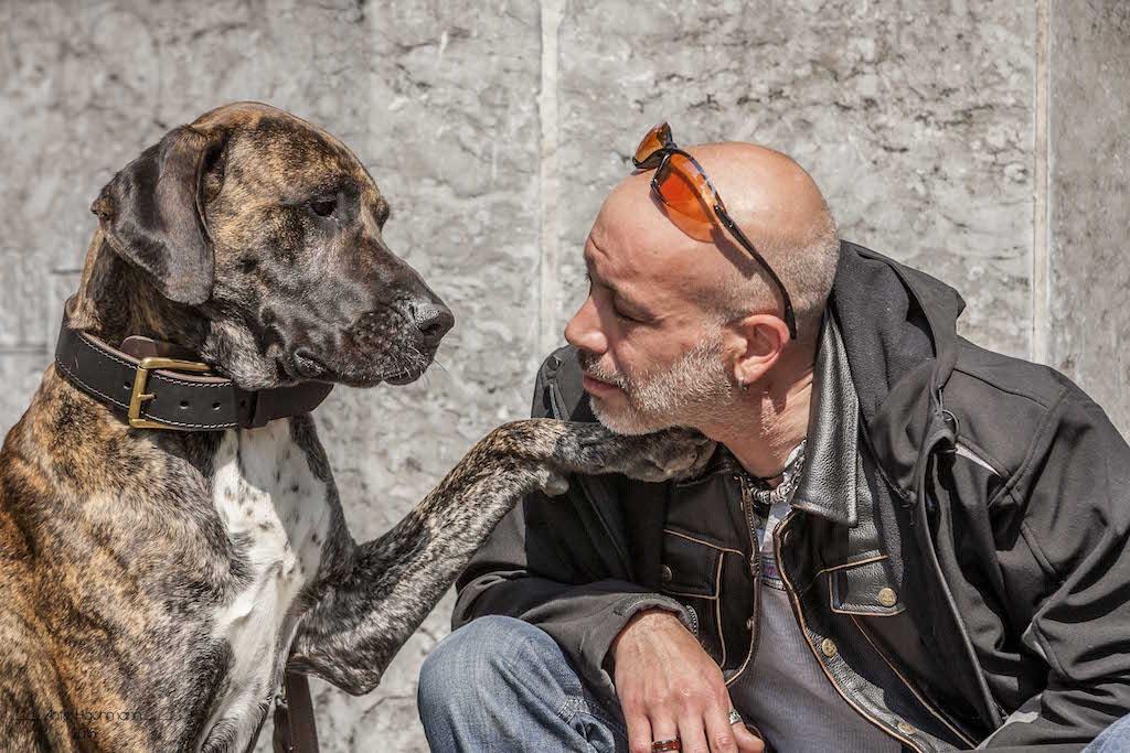 Fast-Dogge Rico Hundeblog miDoggy