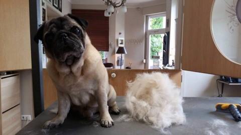 Der Hund und sein Fell – das ewige Thema der richtigen Fellpflege