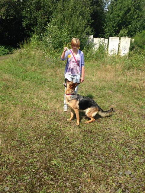 Hunde Blog miDoggy Schäferhund 1