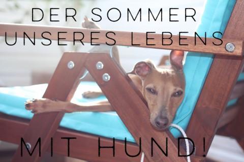 Die 8 besten Beiträge für den Sommer Eures Lebens mit Hund