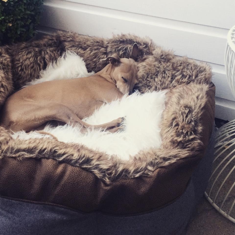 Hunde-Blog miDoggy Wochenrückblick