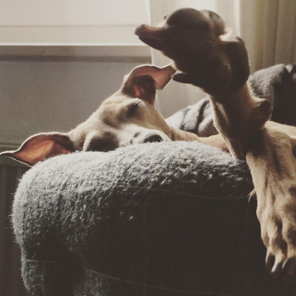Hunde Blog miDoggy Wochenrückblick