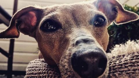 Lola's Spitznamen bei Hundsgemeine Literatur