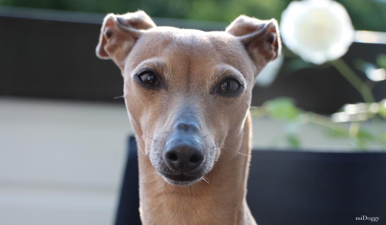 Hundeblog miDoggy Lola