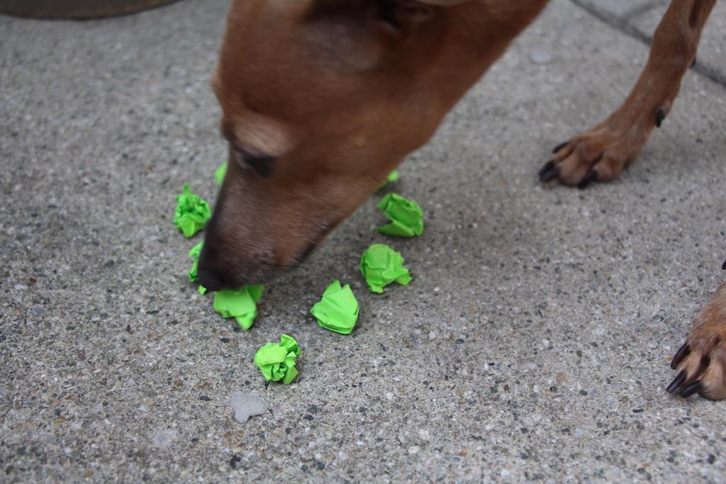 Hundeblog miDoggy Schulhunde