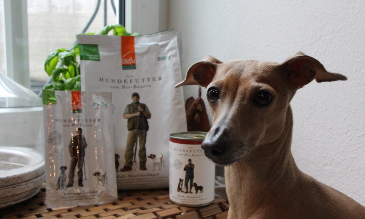 Mäkeligkeit Hundeblog miDoggy