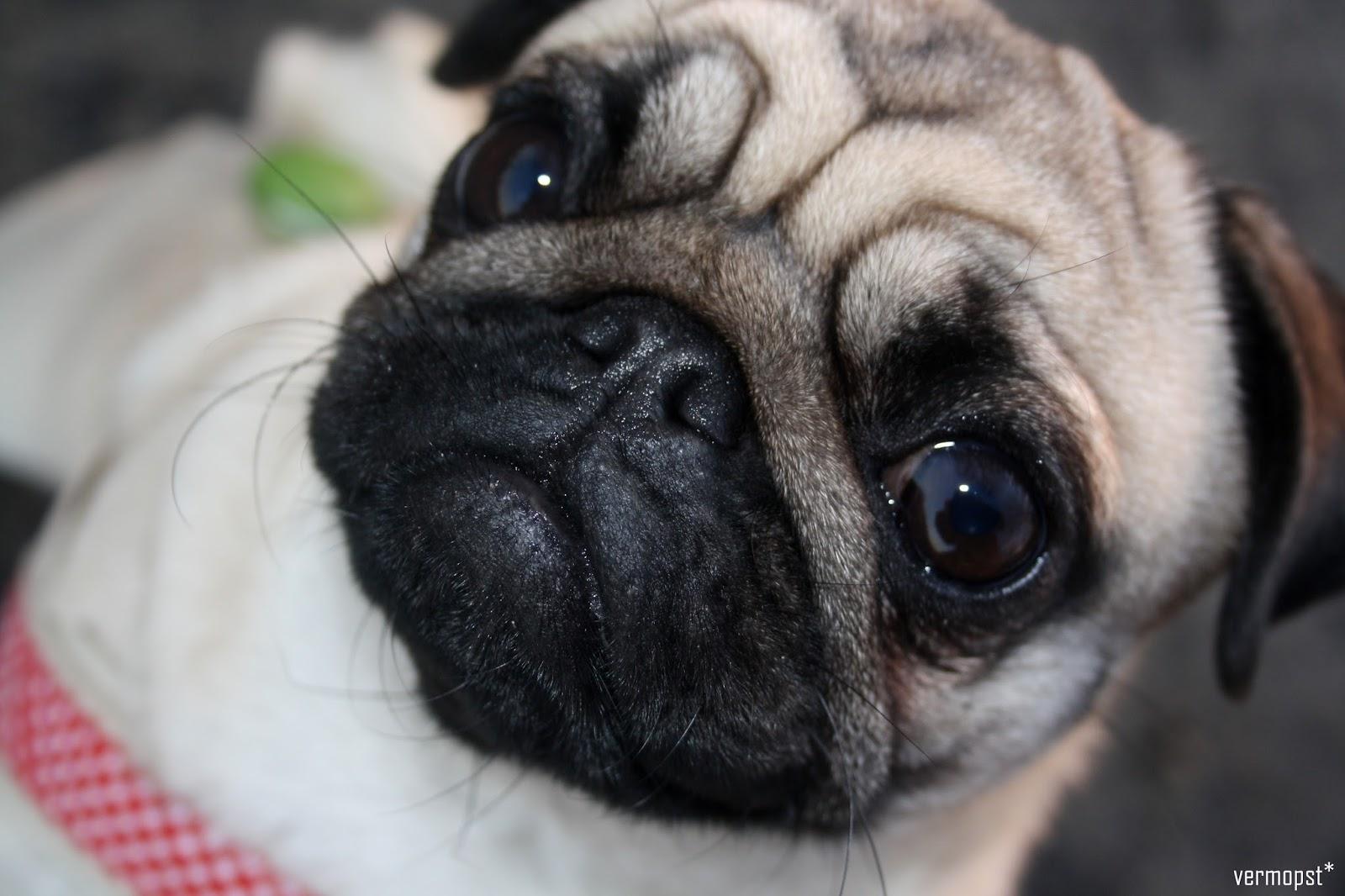 Molly's Freundebuch Hundeblog miDoggy