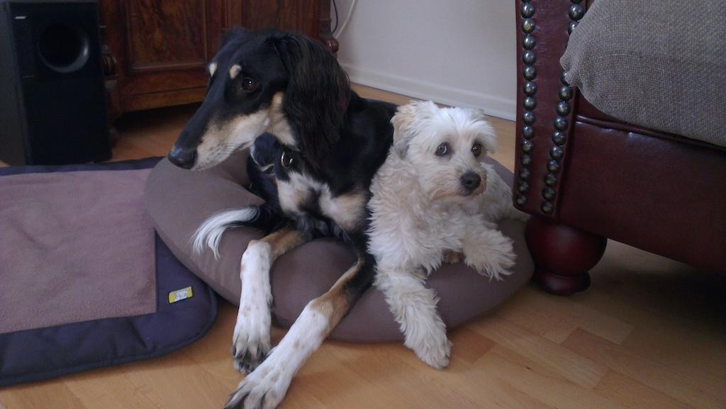 Trainerhund eDgar miDoggy
