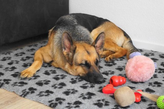 Glücklicher Hund allein daheim miDoggy