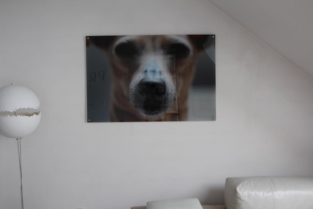 Hunde Fotografie miDoggy