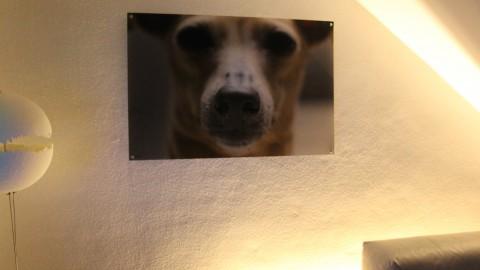 (Hunde-) Fotografie: In drei Schritten zum Unikat an Deiner Wand
