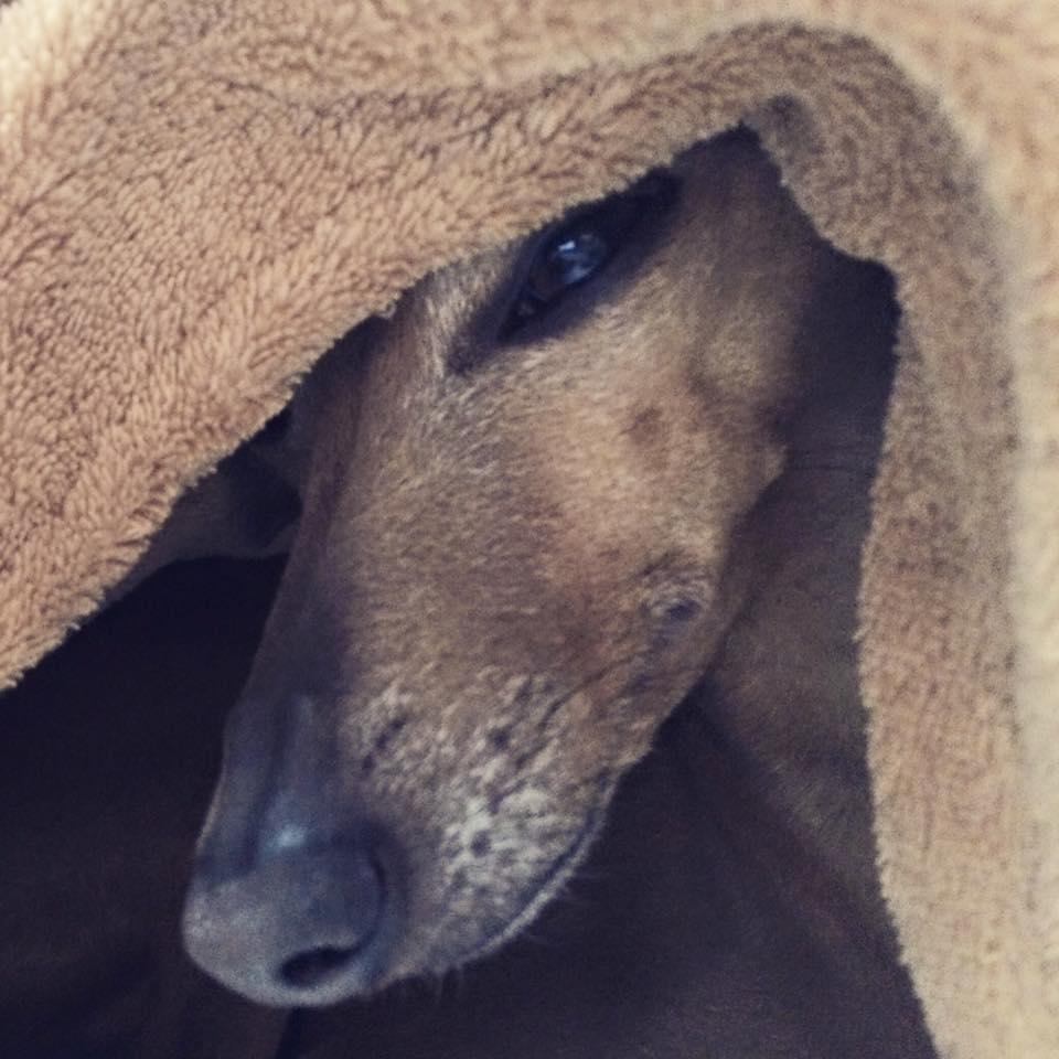 Hundeblog miDoggy Wochenrückblick