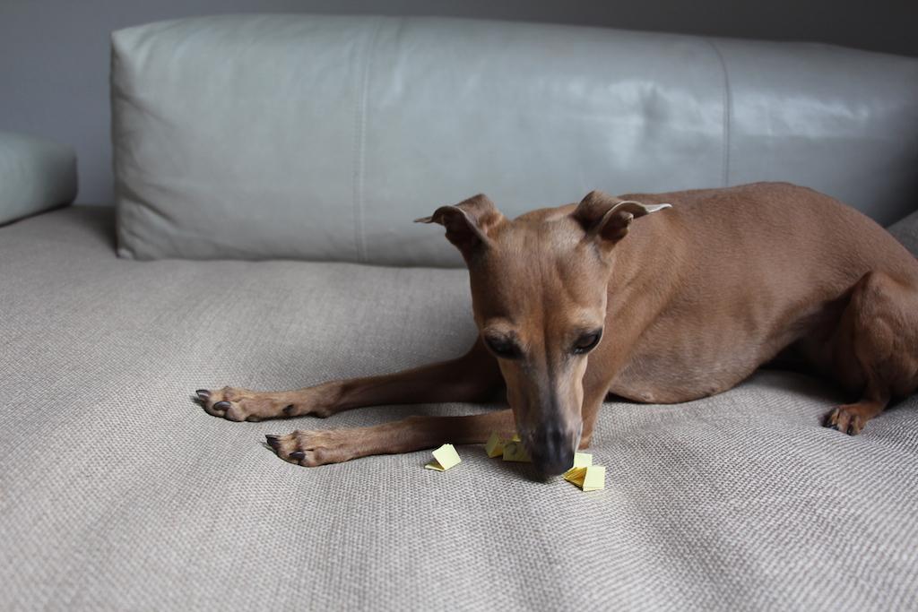 Schulhunde Verlosung